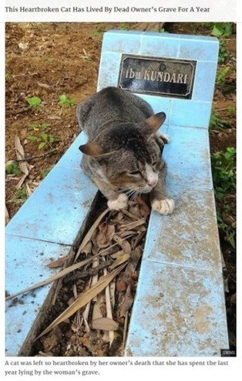 猫とお墓.jpg